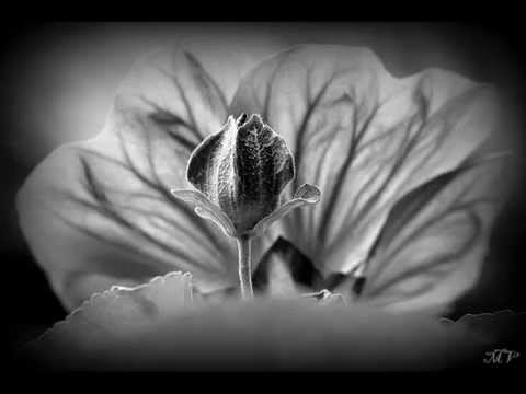 Sarabande de fleurs en noir et blanc youtube Fleur noir et blanc