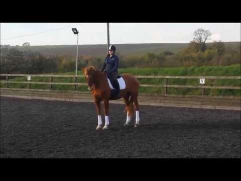 Loz Moose Dressage Lesson Tina Atkins 18 11 2014
