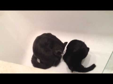 Kittens Sitting in the Bath Bathing Themselves