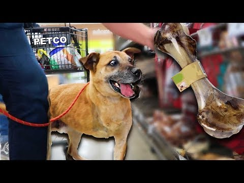 Buying a Homeless Dog EVERYTHING He Touches!