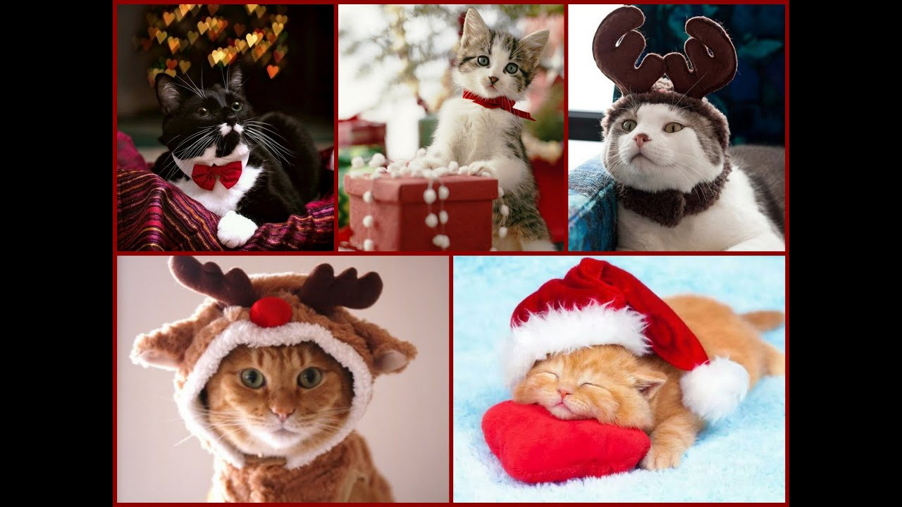 Christmas Cats And Kittens Meowy Christmas Greeting Video YouTube