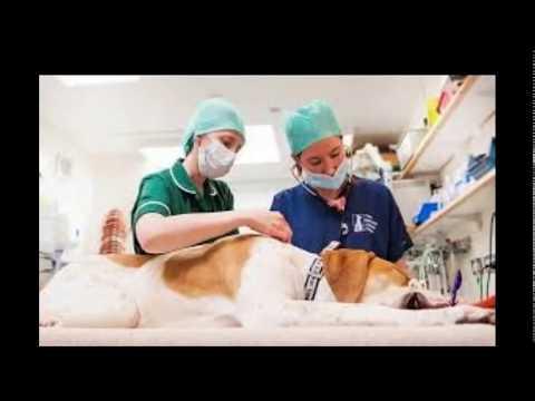 أرقام وعناوين مستشفيات الطب البيطرى بالقاهرة المعلومات اسفل الفديو