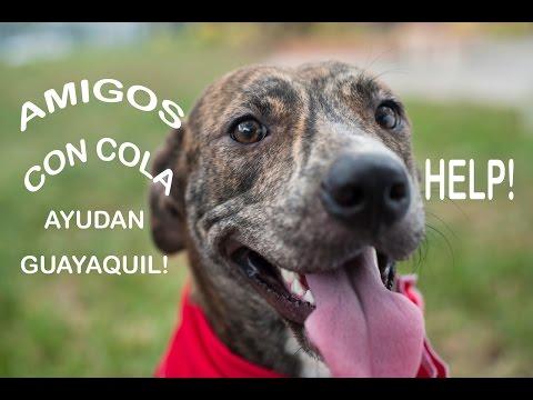 """Fundacion """"Amigos con cola"""", Guayaquil, ECUADOR"""