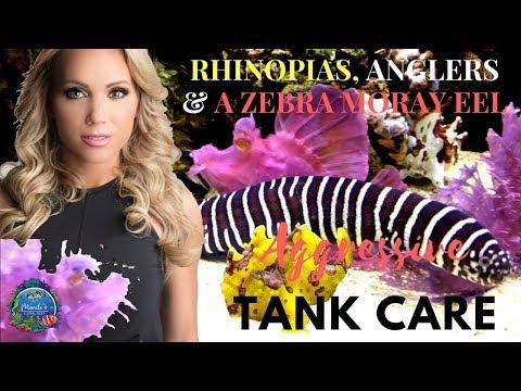 Rhinopias Fish, Anglers & A Zebra Moray Eel - Aggressive Tank Care - Mindi's Coral Reef