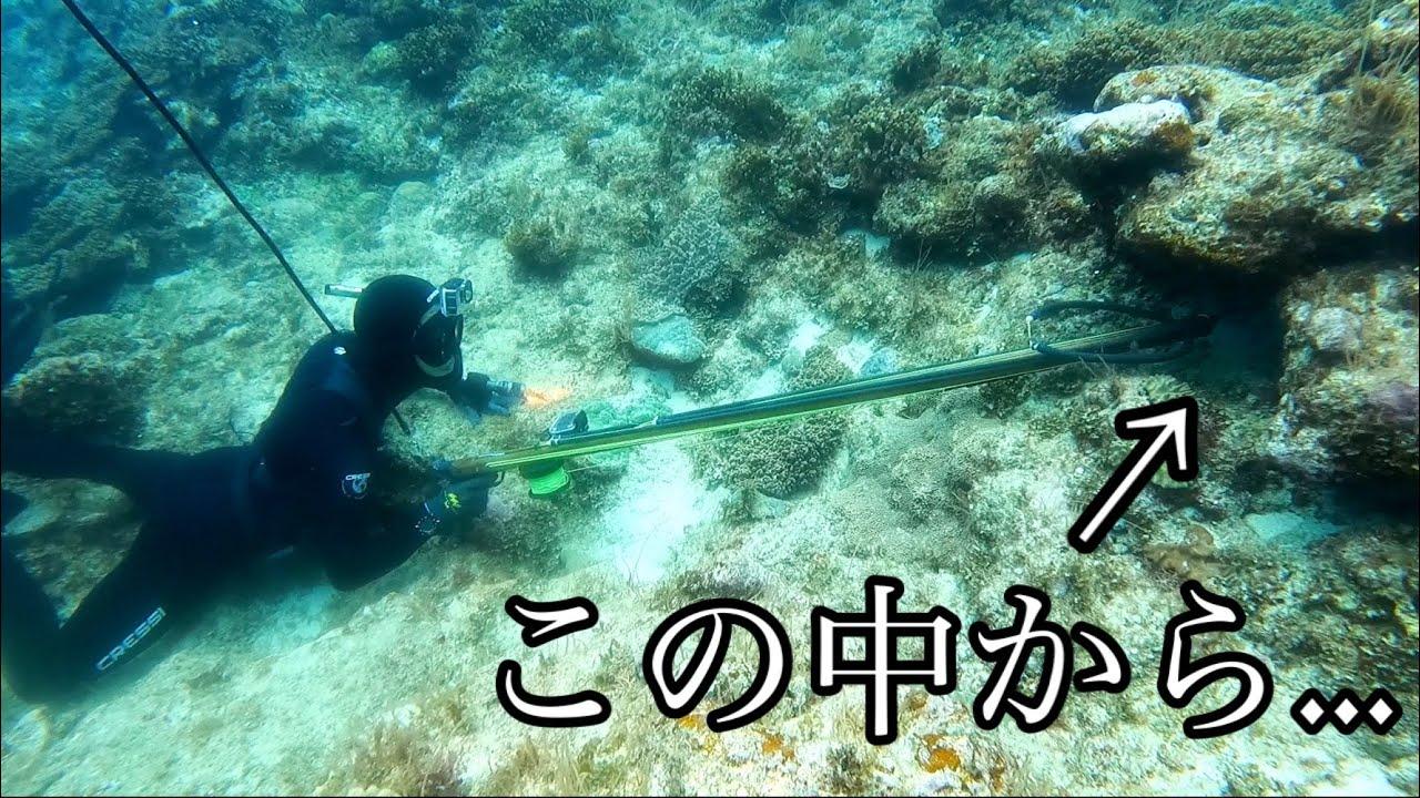 海底10mにある穴に銃をぶち込んだら中からあの高級魚が!!!