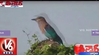 T Government to Impose 3 Years Imprisonment on Hunting Palapitta | Teenmaar News | V6News