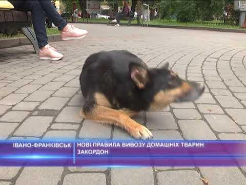 Нові правила вивозу домашніх тварин закордон