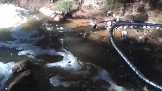 Bony Bream Lake Wyangan 10 3 12