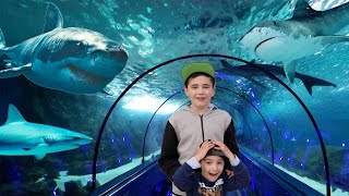 VLOG - DANS LE TUNNEL DES REQUINS À MARINELAND 😱 streaming