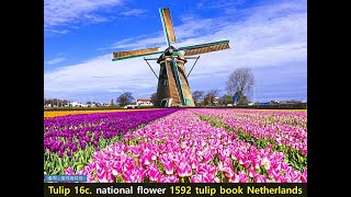 세계도시 바로알기-네덜란드