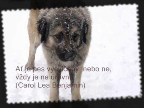 citáty o psech citáty o psech.wmv   YouTube citáty o psech