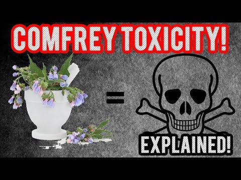 The Truth About Comfrey Toxicity! What You Need To Know!!