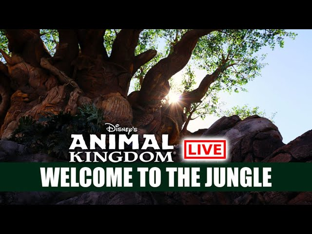 🔴 LIVE: Disney's Animal Kingdom Welcome Back To The Jungle - Walt Disney World Live Stream 🦁🐵🦒