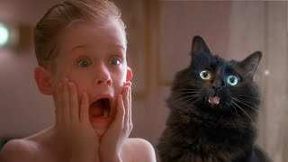 Home Alone with My Cat (OwlKitty Parody)