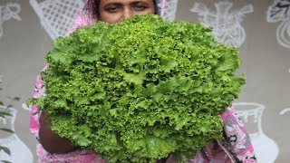 Farm Fresh Lettuce Fry Recipe Village Style Delicious & Tasty  Lettuce Pakora Cooking Village Food