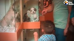 This Is Where Pet Store Puppies Come From | The Dodo