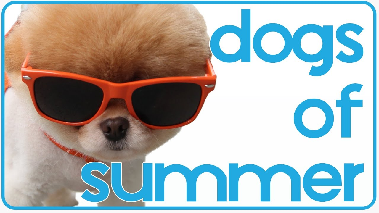 Dogs of Summer | Sunshine Puppies Compilation