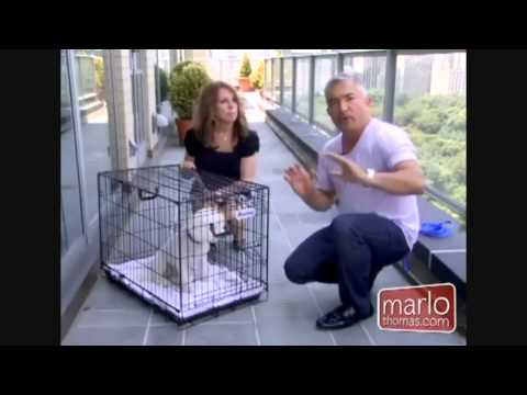 Crate Training Cesar Milan Dog Whisper