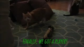 Cats playing, cat playing peek a boo