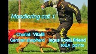 "MR1 ""Mafia"". Cherlat Vitalii Mondioring cat. 1 German shepherd Ingus Royal Friend  139.5 points"