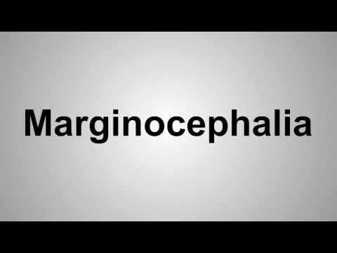 How To Pronounce Marginocephalia