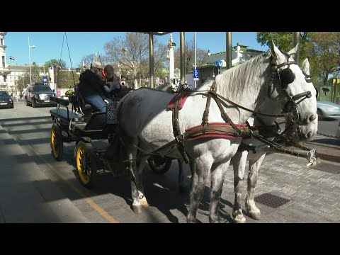 Seniors Get Horse-drawn Carriage Food Deliveries In Vienna Neighbourhood | AFP