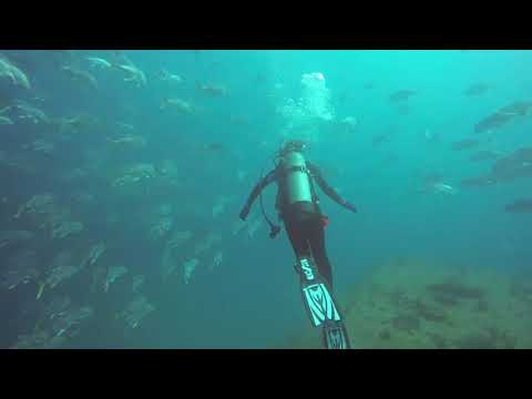ADI Dives | Bianca Dives Sea Emperor Wreck and Reefs of Pompano