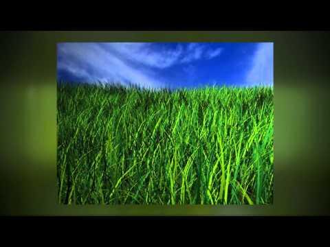 Phoenix, AZ Lawn Maintenance - 7 Lawn Care Tips for a Greener, Thicker, Healthier Lawn