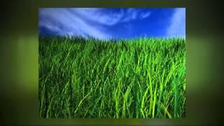 فينيكس, AZ صيانة الحديقة - 7 نصائح للعناية بالحديقة لمدة أكثر اخضرارا وأكثر سمكا وأكثر صحة الحديقة
