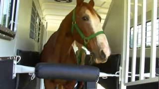 Balanced Ride 2/3 Rear Facing horse trailer