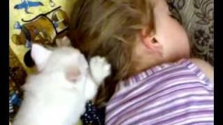 Девочка спит а котёнок мусолит её.mp4