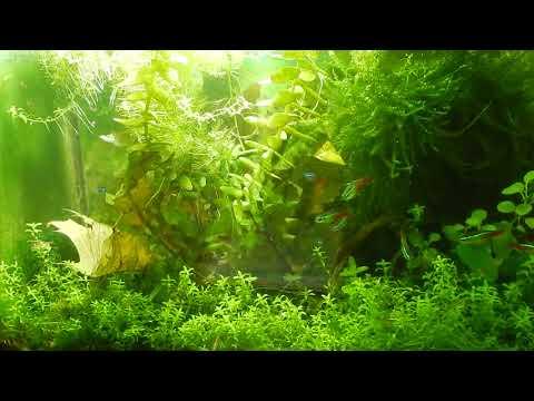 Aqua News №69. Зелёный налёт на стёклах , как устранить?