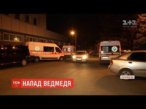 ТСН: На Харківщині ведмідь напав на жінку