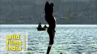 Naga sadhu applying holy ash after bathing in Ganga