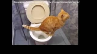 Подборка смешного видео про кошек/Selection of funny videos about cats