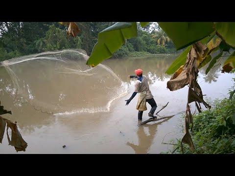 Menjala di Sungai (Siri 4) | Net Casting in Local River | KEDAH MALAYSIA