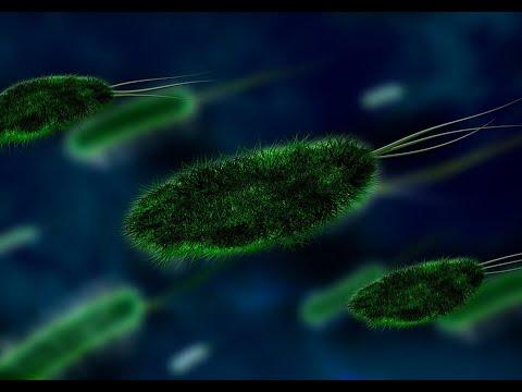 اكتشاف بكتيريا كان يعتقد أنها لا يمكن أن تعيش على الأرض  - نشر قبل 1 ساعة
