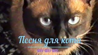 Песня для кота мяу мяу мяу