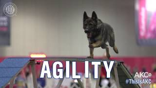 THIS IS AGILITY - AKC National Championship 2018