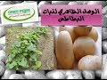 الوصف التفصيلي لبعض أصناف البطاطس