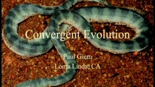 Convergent Evolution 8-15-2015 by Paul Giem