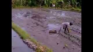 Bali Tour - Bali Rice Field Farming