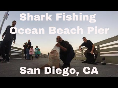 Shark fishing ocean beach pier 100+lbs