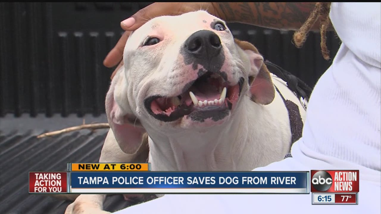 Officer rescues dogs from Hillsborough River
