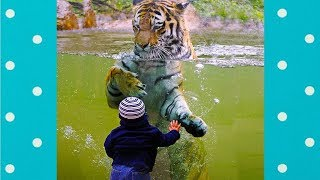 Zoo Animal Attacks! Animals Just Cant Get What Glass Is :)|| Funny Baby and Pet
