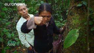 Aid Zone: Inside the rainforest's medicine cabinet