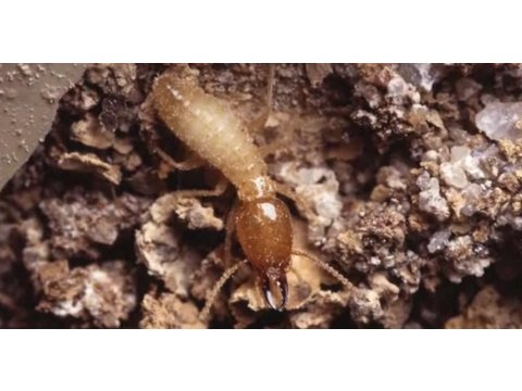 How to Identify Termites | Pest Control