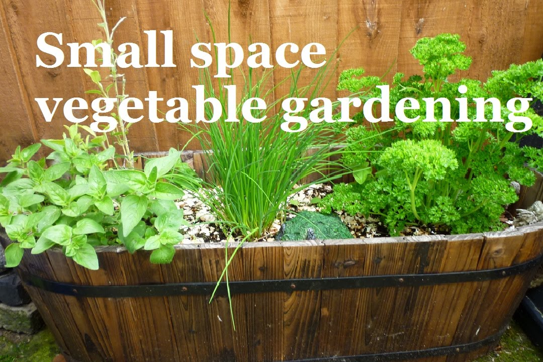 Small space vegetable gardening a series about for Gardening in small spaces