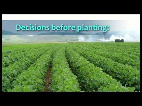 Soybean Cultivation: 01 Introduction - Wessel van Wyk