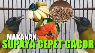 Makanan Alami Supaya Cepet Gacor
